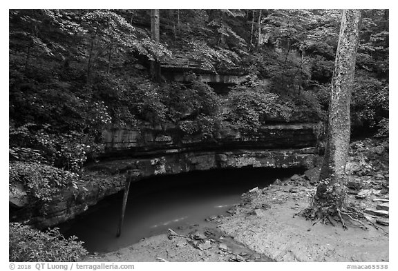 River Styx resurgence in summer. Mammoth Cave National Park (black and white)