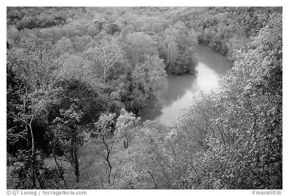 Green River seen from bluff in springtime. Mammoth Cave National Park (black and white)