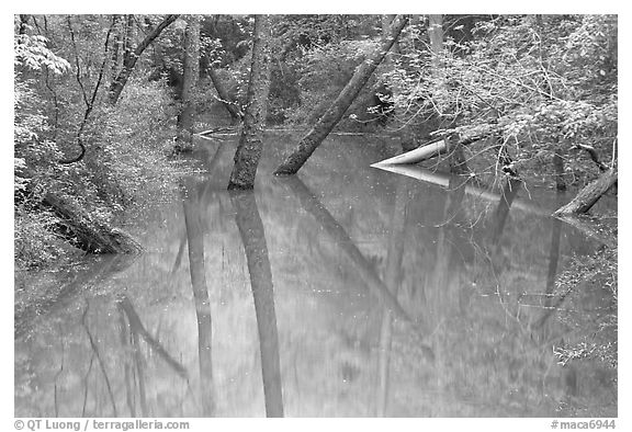 Trees and reflections in Echo River Spring. Mammoth Cave National Park (black and white)
