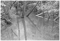 Trees and reflections in Echo River Spring. Mammoth Cave National Park, Kentucky, USA. (black and white)