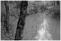 Echo River Spring. Mammoth Cave National Park, Kentucky, USA. (black and white)