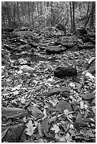 Fallen leaves and rocks in autumn. Shenandoah National Park ( black and white)