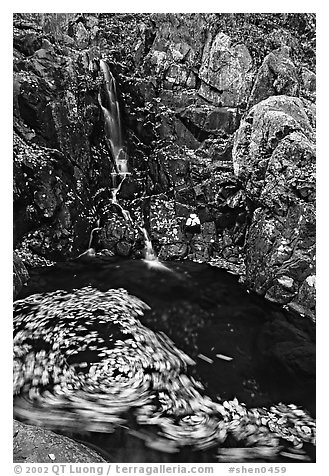Spining leaves and cascade. Shenandoah National Park (black and white)