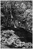 Spining leaves and cascade. Shenandoah National Park, Virginia, USA. (black and white)