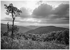 Tree and overlook in the spring. Shenandoah National Park, Virginia, USA. (black and white)