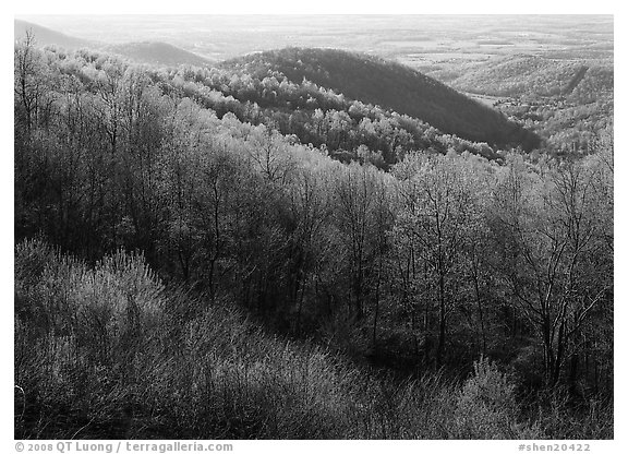 Trees and hills in the spring, late afternoon, Hensley Hollow. Shenandoah National Park (black and white)