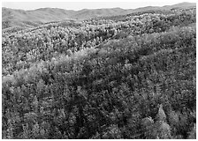 Hillside with bare trees and trees in early spring foliage. Shenandoah National Park ( black and white)
