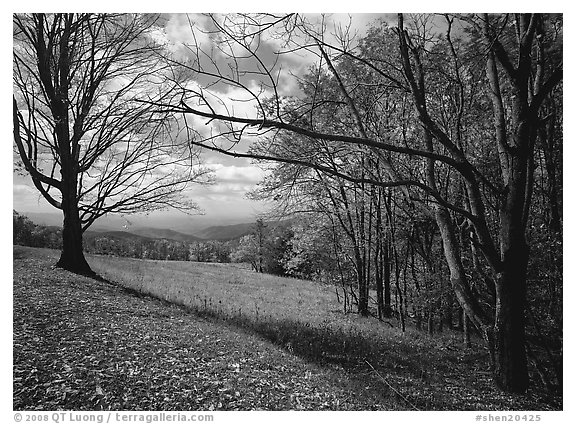 Meadow Overlook in fall. Shenandoah National Park (black and white)