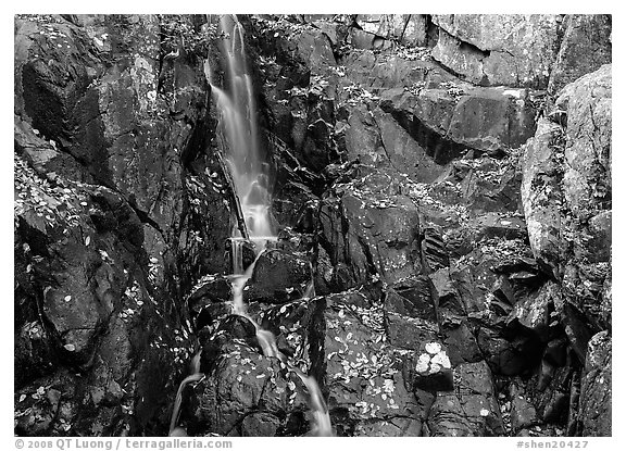 Cascade and fallen leaves. Shenandoah National Park (black and white)