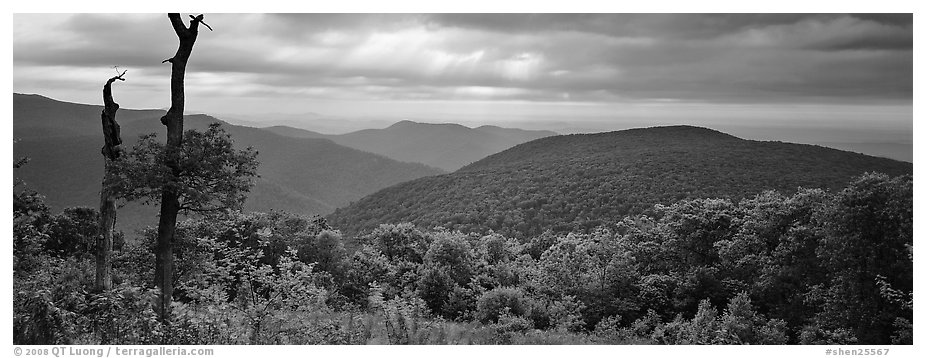 Hillside, forest and ridges in early summer. Shenandoah National Park (black and white)