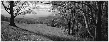 Clearing with trees in autumn colors and distant ridges. Shenandoah National Park (Panoramic black and white)