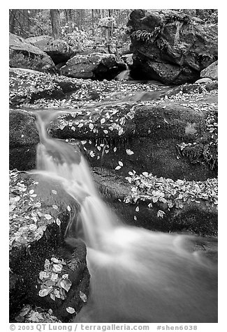 Creek and mossy boulders in fall with fallen leaves. Shenandoah National Park (black and white)