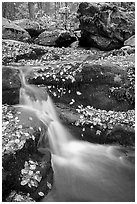 Creek and mossy boulders in fall with fallen leaves. Shenandoah National Park, Virginia, USA. (black and white)