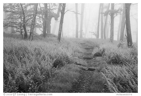 Appalachian Trail in foggy forest at springtime. Shenandoah National Park (black and white)