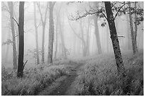 Appalachian Trail in lush forest with fog. Shenandoah National Park ( black and white)