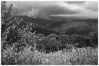 Wildflowers and hills from Duck Hollow Overlook. Shenandoah National Park ( black and white)