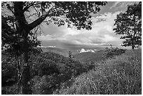 Trees framing clearing storm, Duck Hollow Overlook. Shenandoah National Park ( black and white)