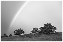 Rainbow and trees in full leaves, Big Meadows. Shenandoah National Park ( black and white)