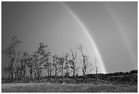 Double rainbow and trees, Big Meadows. Shenandoah National Park ( black and white)