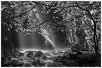 Ephemeral waterfall in Whiteoak Canyon. Shenandoah National Park ( black and white)