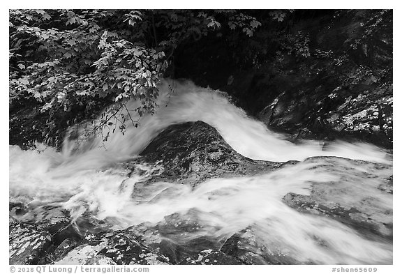 Robinson River whitewater in Whiteoak Canyon. Shenandoah National Park (black and white)