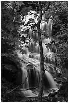 Trees and waterfall, Whiteoak Canyon. Shenandoah National Park ( black and white)