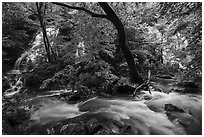 Multiple waterfalls and Robinson River, Whiteoak Canyon. Shenandoah National Park ( black and white)