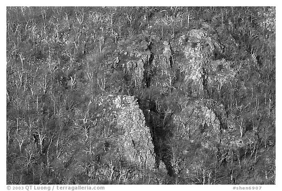 Rocky outcrops and trees at sunrise. Shenandoah National Park (black and white)