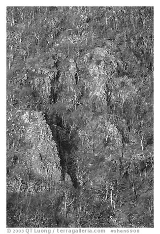 Bare trees and rocky outcrops on hillside near Little Stony Man. Shenandoah National Park (black and white)