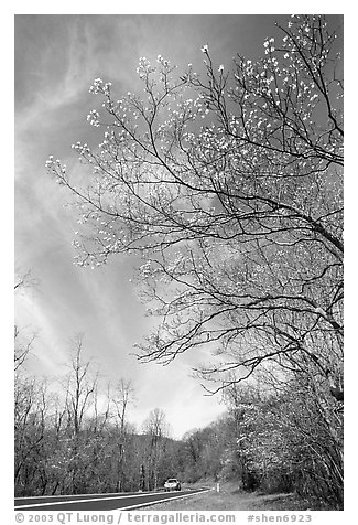 Skyline drive. Shenandoah National Park (black and white)