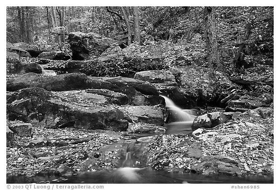Hogcamp Branch of the Rose River. Shenandoah National Park (black and white)