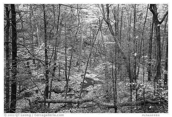 Creek in fall. Shenandoah National Park (black and white)