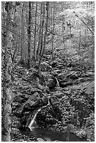 Cascades in fall, Hogcamp Branch of the Rose River. Shenandoah National Park, Virginia, USA. (black and white)