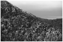 Hillside with fall colors, rocks, and early snow. Shenandoah National Park ( black and white)