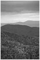 Hillside and receding ridges in autumn. Shenandoah National Park ( black and white)
