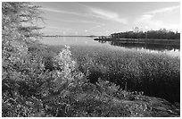 Grasses at Black Bay narrows. Voyageurs National Park, Minnesota, USA. (black and white)