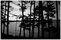 Pine trees silhouettes at sunset, Woodenfrog. Voyageurs National Park ( black and white)