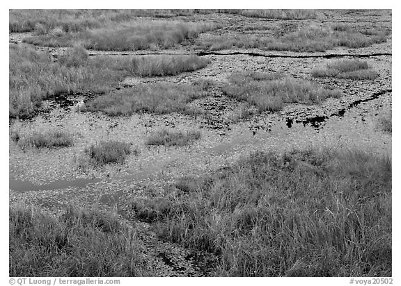 Grasses and marsh. Voyageurs National Park (black and white)