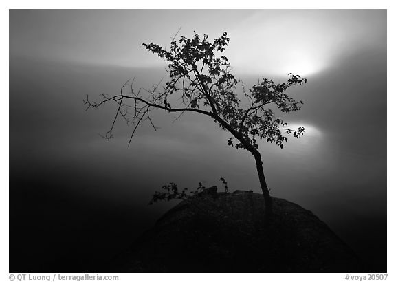 Black and white picture photo sun tree and fog kabetogama lake voyageurs national park