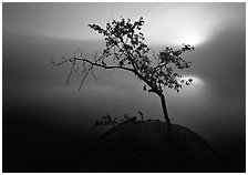 Sun, tree, and fog, Kabetogama Lake. Voyageurs National Park ( black and white)