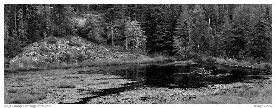 Marsh and north woods forest. Voyageurs National Park (black and white)