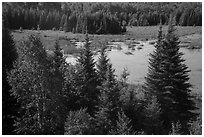 Beaver Pond Overlook, Ash River. Voyageurs National Park ( black and white)
