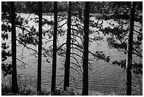 Trees bordering Blind Ash Bay. Voyageurs National Park ( black and white)