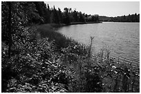 Blind Ash Bay. Voyageurs National Park ( black and white)