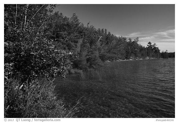 Forested shore of Mukooda Lake. Voyageurs National Park (black and white)