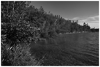 Forested shore of Mukooda Lake. Voyageurs National Park ( black and white)
