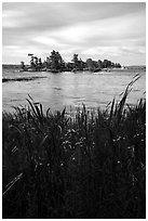 Grasses, wildflowers, and islet, Sand Point Lake. Voyageurs National Park ( black and white)