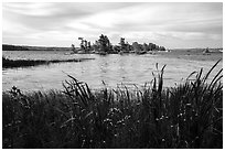 Wildflowers, and islet, Houseboat Island, Sand Point Lake. Voyageurs National Park ( black and white)