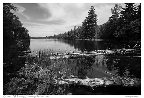 Fallen trees and Beast Lake. Voyageurs National Park (black and white)