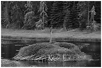 Beaver house. Voyageurs National Park ( black and white)